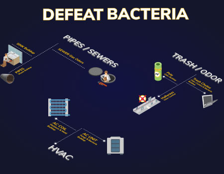 Bacteria Facts